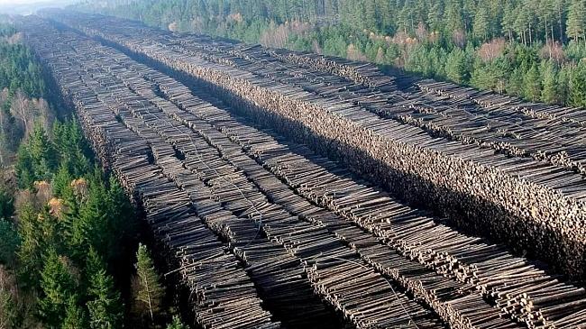Вывоз леса изРоссии ускорился на25%